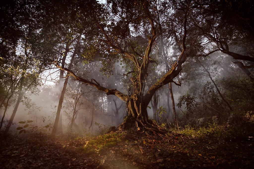 L'arbre ancêtre