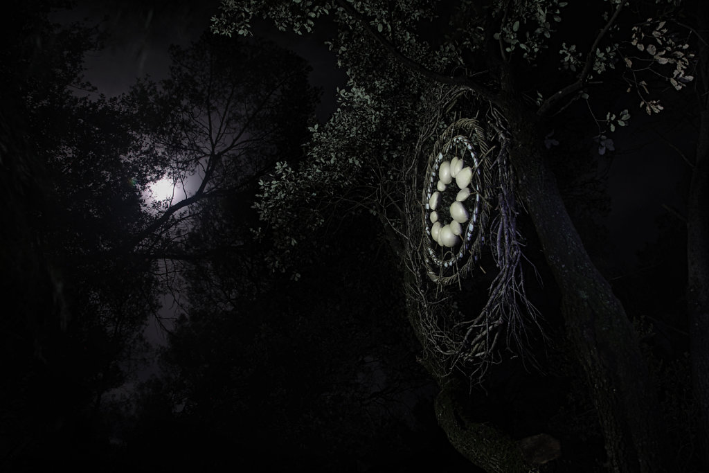 Fullmoon in the forest