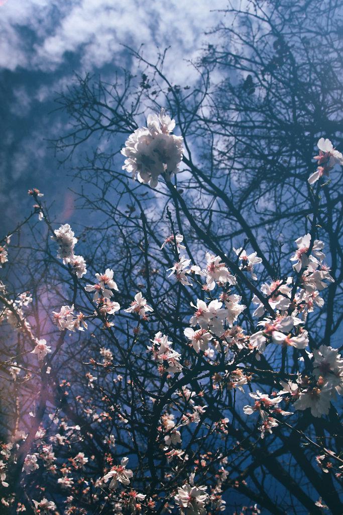 Explosion de fleurs, le printemps